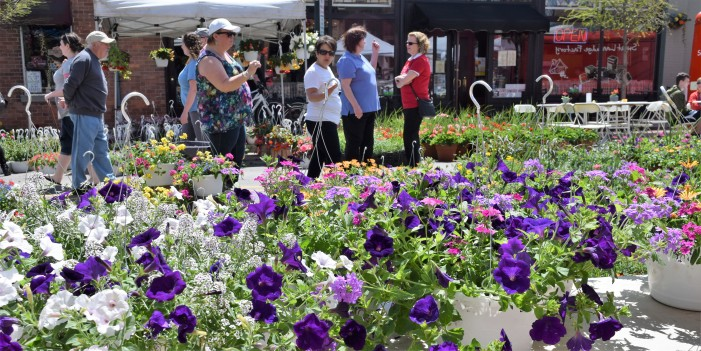 Flower Fair flourishes in downtown Lake Orion this weekend