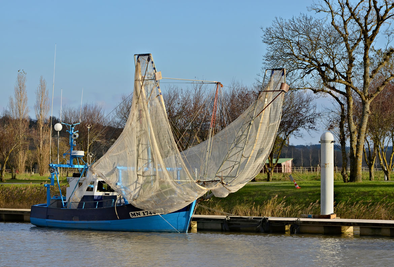 Mortagne-sur-Gironde_Civellier_Mayflowers_2013