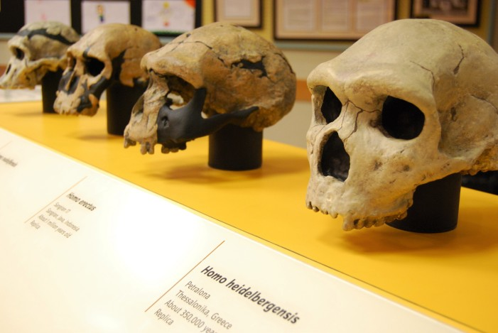 Traveling human origins exhibit on display at library